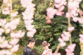 岡山後楽園・倉敷美観地区での桜前撮り 岡山後楽園・倉敷美観地区での桜前撮りの受付を開始いたしました!! 大人気のシーズンで、昨年、一昨年と1月下旬には、かなりのお日にちがご予約完売いたしました。 桜シーズンの前撮りをご検討中の新郎新婦様はお早めにお問い合わせください。 岡山市内・倉敷市内出張料金無料です。 ※土日祝日は休日料金として15,000円(税別)かかります。その他追加料金が発生することはございません。 ※各キャンペーン時期は、桜の開花や紅葉が色づく時期とは関係ございませんのでご注意ください。 岡山県の桜開花時期 岡山県の桜は、平年は3月29日、満開は4月6日と言われています。 2018年 開花の日は3月25日で、平年より4日早く、満開の日は3月28日で、平年より9日早かったです。 2017年 4月1日 2016年 3月26日 2015年 3月28日 岡山後楽園は、岡山市街の他の公園と比較してもやや遅いです!! 2019年のお写真 それでは、2019年の実際の 3月28日 この頃から後楽園の桜は写真に残る程度、開花いたしました。 毎年、園内より、園外の桜の方が、早く咲きます。 3月30日 3月31日 この日から園内の桜が写真に残る程度に咲き始めました。 4月1日 後楽園外の桜は満開に近いですね! 4月2日 園内の桜もだいぶ満開に近くなってまいりましたが、まだ6〜7分咲きといった程度でしょうか。 それでも綺麗ですね! 4月4日 後楽園内もモリモリになってきました! 後楽園の外の桜も満開に近いですね!! 4月6日 後楽園の内外で、もっとも遅く咲く桜、醍醐桜です! こちらの桜、昨年は、4月6日から17日まで咲いていました! 信じられないほど、遅くまで咲いている桜が後楽園にはあります!! ということで、4月7日〜17日のお写真は後編でのご紹介になります!!  岡山市内・倉敷市内出張料金無料です。 ※土日祝日は休日料金として15,000円(税別)かかります。その他追加料金が発生することはございません。 2019年11月9日〜12月15日の期間に撮影いただきましたお客様限定で、岡山後楽園での和装1点プランが78,000円(税別)!! 2020年1月11日〜3月15日の期間に撮影いただきましたお客様限定で、岡山後楽園での和装1点プランが78,000円(税別)!! 2020年3月19日〜4月19日の期間に撮影いただきましたお客様限定で、岡山後楽園での和装1点プランが78,000円(税別)!! ※各キャンペーンは早期受付期間が終了し次第、価格が変更になる場合がございます。 紅葉前撮りキャンペーンの受付を開始いたしました! 2020年新春キャンペーン前撮りキャンペーンの受付を開始いたしました! 2020年桜前撮りキャンペーンの受付を開始いたしました! 足袋や着物用の肌着など、お客様にご用意いただくものは一切ございません! 後楽園への撮影許可申請も弊社で行います!申請料金、新郎新婦様分の入場料金も弊社が負担させていただきます。 事前のご来店も不要!こちらより衣装を3着お選びいただきまして、撮影当日にご試着いただいて撮影に使用する衣装をお決めいただく流れとなっております。(打掛は全てフリーサイズのものを新婦様の体型に合わせて着付けて行きますので、ご安心ください。) リーズナブルに、手間なく、お気軽に岡山後楽園での和装前撮りを行なって頂けます! 前撮りに必要なものが全て含まれたプランです! ロケ地の2箇所目以降の追加、アルバムなどの有料オプションをご使用になられない場合は、追加料金は一切ございません。 前撮り ご予約時間は基本的には8時45分と13時00分の2枠となっております。 こちらからスケジュールをご確認いただきまして、お問い合わせください。 全てコミコミで78000円~という低予算で、しっかりと満足いただけるクオリティーの高いウェディングフォトを、責任持ってお撮りします。 ご予約お待ちしております! 足袋や着物用の肌着など、お客様にご用意いただくものは一切ございません! 後楽園への撮影許可申請も弊社で行います!申請料金、新郎新婦様分の入場料金も弊社が負担させていただきます。 事前のご来店も不要!こちらより衣装を3着お選びいただきまして、撮影当日にご試着いただいて撮影に使用する衣装をお決めいただく流れとなっております。(打掛は全てフリーサイズのものを新婦様の体型に合わせて着付けて行きますので、ご安心ください。) リーズナブルに、手間なく、お気軽に岡山後楽園での和装前撮りを行なって頂けます! 前撮りに必要なものが全て揃って、和装1点78000円(税別)と大変お安いお得な価格でご案内させていただきます。41246