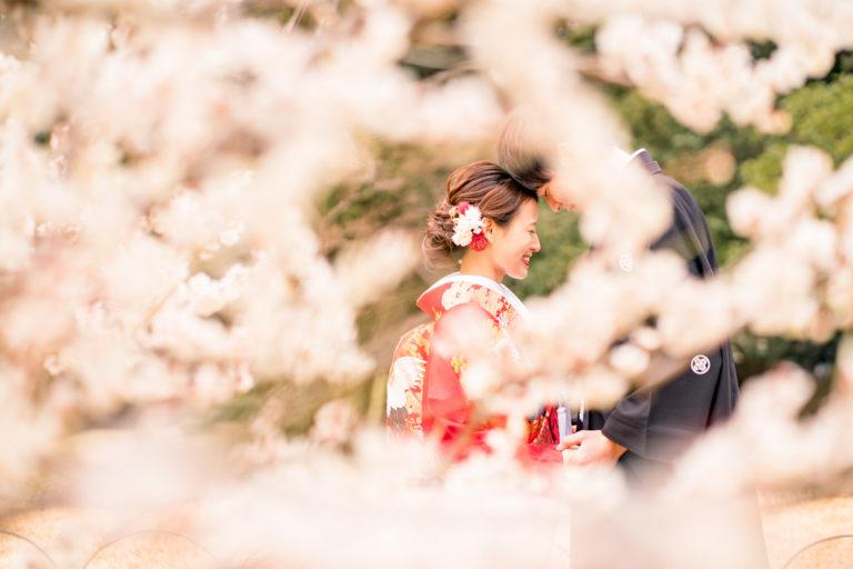 岡山後楽園・倉敷美観地区での桜前撮り 岡山後楽園・倉敷美観地区での桜前撮りの受付を開始いたしました!! 大人気のシーズンで、昨年、一昨年と1月下旬には、かなりのお日にちがご予約完売いたしました。 桜シーズンの前撮りをご検討中の新郎新婦様はお早めにお問い合わせください。 岡山市内・倉敷市内出張料金無料です。 ※土日祝日は休日料金として15,000円(税別)かかります。その他追加料金が発生することはございません。 ※各キャンペーン時期は、桜の開花や紅葉が色づく時期とは関係ございませんのでご注意ください。 岡山県の桜開花時期 岡山県の桜は、平年は3月29日、満開は4月6日と言われています。 2018年 開花の日は3月25日で、平年より4日早く、満開の日は3月28日で、平年より9日早かったです。 2017年 4月1日 2016年 3月26日 2015年 3月28日 岡山後楽園は、岡山市街の他の公園と比較してもやや遅いです!! 2019年のお写真 それでは、2019年の実際の 3月28日 この頃から後楽園の桜は写真に残る程度、開花いたしました。 毎年、園内より、園外の桜の方が、早く咲きます。 3月30日 3月31日 この日から園内の桜が写真に残る程度に咲き始めました。 4月1日 後楽園外の桜は満開に近いですね! 4月2日 園内の桜もだいぶ満開に近くなってまいりましたが、まだ6〜7分咲きといった程度でしょうか。 それでも綺麗ですね! 4月4日 後楽園内もモリモリになってきました! 後楽園の外の桜も満開に近いですね!! 4月6日 後楽園の内外で、もっとも遅く咲く桜、醍醐桜です! こちらの桜、昨年は、4月6日から17日まで咲いていました! 信じられないほど、遅くまで咲いている桜が後楽園にはあります!! ということで、4月7日〜17日のお写真は後編でのご紹介になります!!  岡山市内・倉敷市内出張料金無料です。 ※土日祝日は休日料金として15,000円(税別)かかります。その他追加料金が発生することはございません。 2019年11月9日〜12月15日の期間に撮影いただきましたお客様限定で、岡山後楽園での和装1点プランが78,000円(税別)!! 2020年1月11日〜3月15日の期間に撮影いただきましたお客様限定で、岡山後楽園での和装1点プランが78,000円(税別)!! 2020年3月19日〜4月19日の期間に撮影いただきましたお客様限定で、岡山後楽園での和装1点プランが78,000円(税別)!! ※各キャンペーンは早期受付期間が終了し次第、価格が変更になる場合がございます。 紅葉前撮りキャンペーンの受付を開始いたしました! 2020年新春キャンペーン前撮りキャンペーンの受付を開始いたしました! 2020年桜前撮りキャンペーンの受付を開始いたしました! 足袋や着物用の肌着など、お客様にご用意いただくものは一切ございません! 後楽園への撮影許可申請も弊社で行います!申請料金、新郎新婦様分の入場料金も弊社が負担させていただきます。 事前のご来店も不要!こちらより衣装を3着お選びいただきまして、撮影当日にご試着いただいて撮影に使用する衣装をお決めいただく流れとなっております。(打掛は全てフリーサイズのものを新婦様の体型に合わせて着付けて行きますので、ご安心ください。) リーズナブルに、手間なく、お気軽に岡山後楽園での和装前撮りを行なって頂けます! 前撮りに必要なものが全て含まれたプランです! ロケ地の2箇所目以降の追加、アルバムなどの有料オプションをご使用になられない場合は、追加料金は一切ございません。 前撮り ご予約時間は基本的には8時45分と13時00分の2枠となっております。 こちらからスケジュールをご確認いただきまして、お問い合わせください。 全てコミコミで78000円~という低予算で、しっかりと満足いただけるクオリティーの高いウェディングフォトを、責任持ってお撮りします。 ご予約お待ちしております! 足袋や着物用の肌着など、お客様にご用意いただくものは一切ございません! 後楽園への撮影許可申請も弊社で行います!申請料金、新郎新婦様分の入場料金も弊社が負担させていただきます。 事前のご来店も不要!こちらより衣装を3着お選びいただきまして、撮影当日にご試着いただいて撮影に使用する衣装をお決めいただく流れとなっております。(打掛は全てフリーサイズのものを新婦様の体型に合わせて着付けて行きますので、ご安心ください。) リーズナブルに、手間なく、お気軽に岡山後楽園での和装前撮りを行なって頂けます! 前撮りに必要なものが全て揃って、和装1点78000円(税別)と大変お安いお得な価格でご案内。新作ご衣装1201-4-1-1024x683okayamam