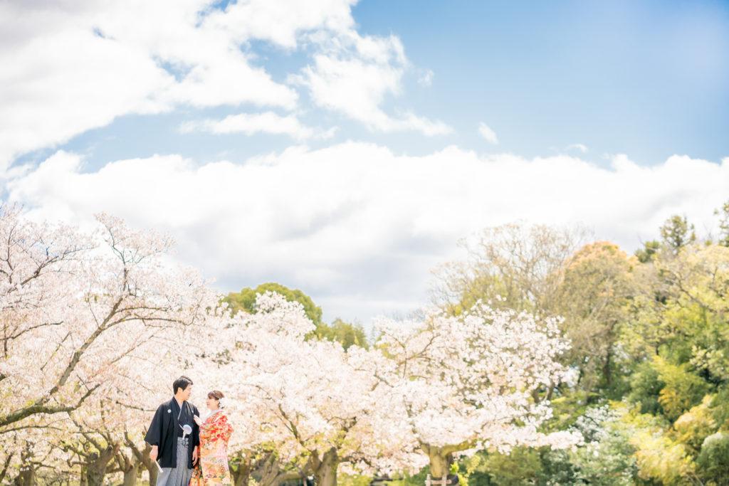 前撮り岡山フォトウエディング和装ロケ後楽園倉敷美観地区お得な桜前撮りキャンペーン和装2点でアルバムプレゼント料金アップなし2021年も岡山での前撮りをよろしくお願いします